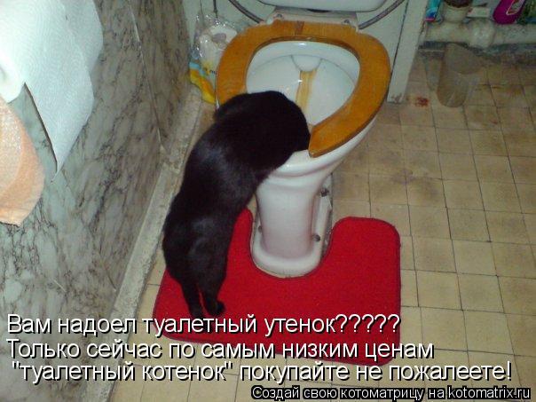 """Котоматрица: Вам надоел туалетный утенок????? Только сейчас по самым низким ценам  """"туалетный котенок"""" покупайте не пожалеете!"""