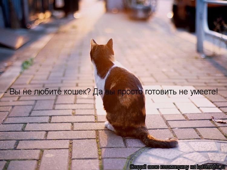 Котоматрица: - Вы не любите кошек? Да вы просто готовить не умеете!