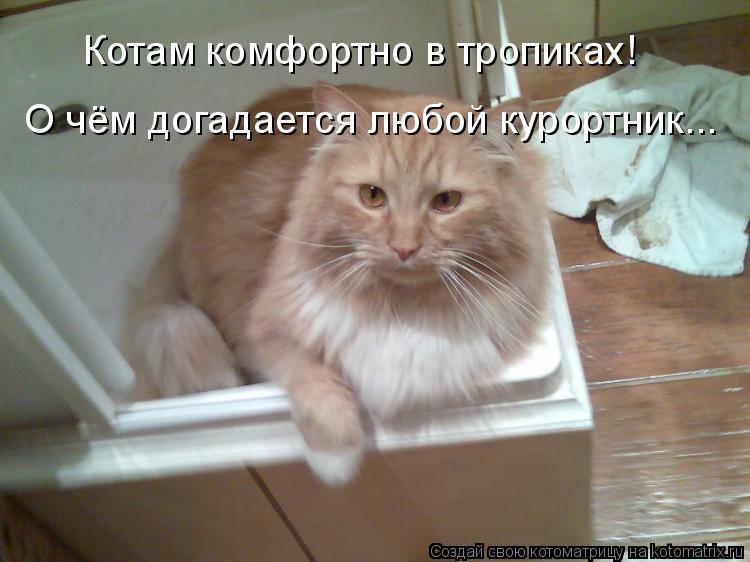 Котоматрица: Котам комфортно в тропиках! О чём догадается любой курортник...