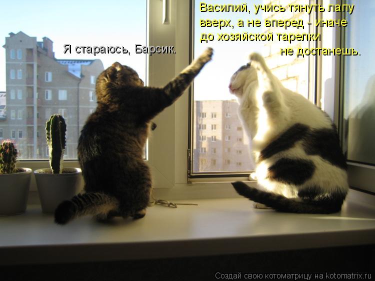 Котоматрица: Василий, учись тянуть лапу вверх, а не вперед - иначе до хозяйской тарелки не достанешь. Я стараюсь, Барсик.