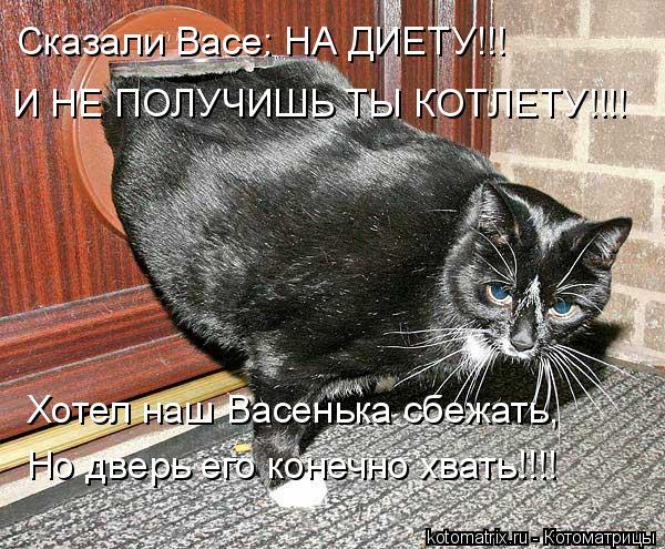 Котоматрица: Сказали Васе: НА ДИЕТУ!!! И НЕ ПОЛУЧИШЬ ТЫ КОТЛЕТУ!!!! Хотел наш Васенька сбежать, Но дверь его конечно хвать!!!!