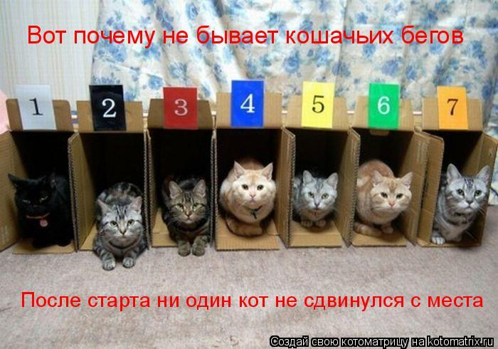 Котоматрица: Вот почему не бывает кошачьих бегов После старта ни один кот не сдвинулся с места