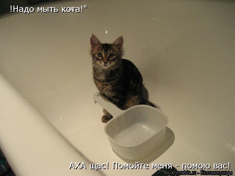 """Котоматрица: !Надо мыть кота!"""" АХА щас! Помойте меня - помою вас!"""