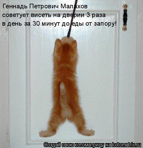Котоматрица: Геннадь Петрович Малахов советует висеть на дверии 3 раза в день за 30 минут до еды от запору!