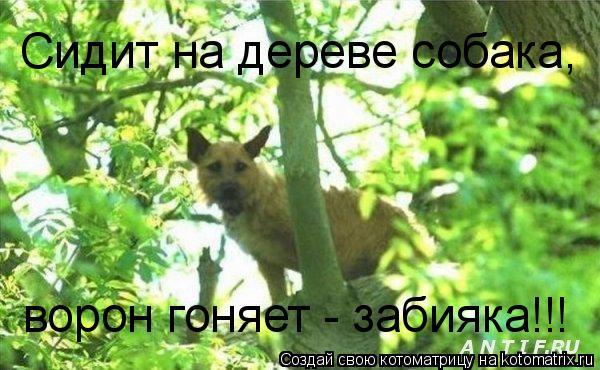 Котоматрица: Сидит на дереве собака, ворон гоняет - забияка!!!