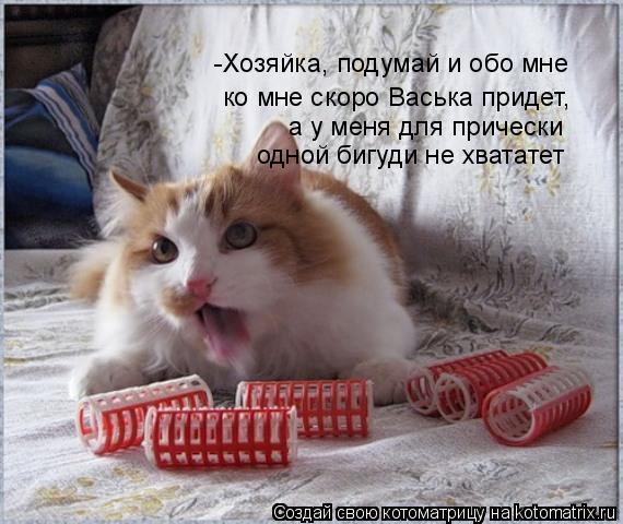 Котоматрица: -Хозяйка, подумай и обо мне  а у меня для прически  одной бигуди не хвататет ко мне скоро Васька придет,