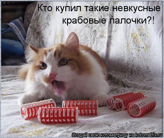 Котоматрица: Кто купил такие невкусные крабовые палочки?! Кто купил такие невкусные  крабовые палочки?!