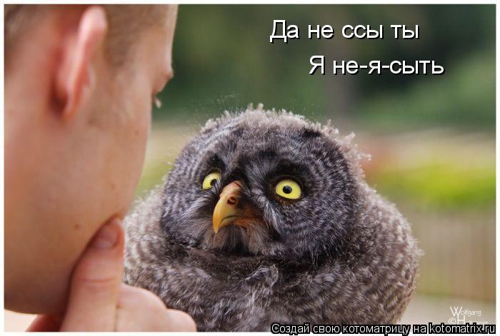 Котоматрица: Да не ссы ты Я не-я-сыть