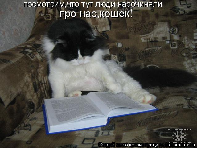 Котоматрица: посмотрим,что тут люди насочиняли про нас,кошек!