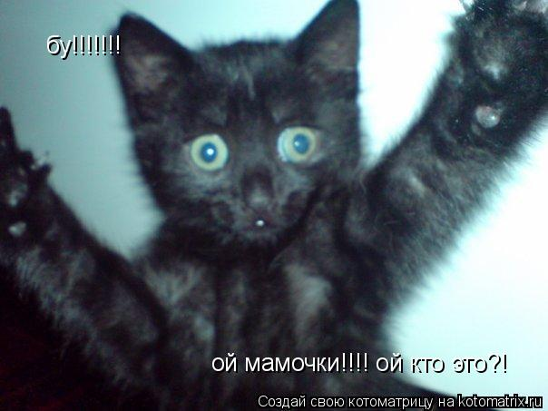 Котоматрица: ой мамочки!!!! ой кто это?! бу!!!!!!!