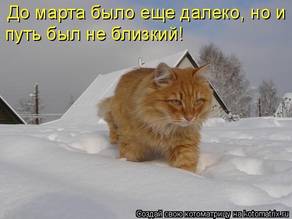 Котоматрица: До марта было еще далеко, но и путь был не близкий!
