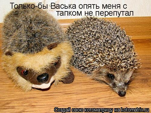 Котоматрица: Только-бы Васька опять меня с тапком не перепутал