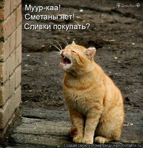 Котоматрица: Муур-каа! Сметаны нет! Сливки покупать?