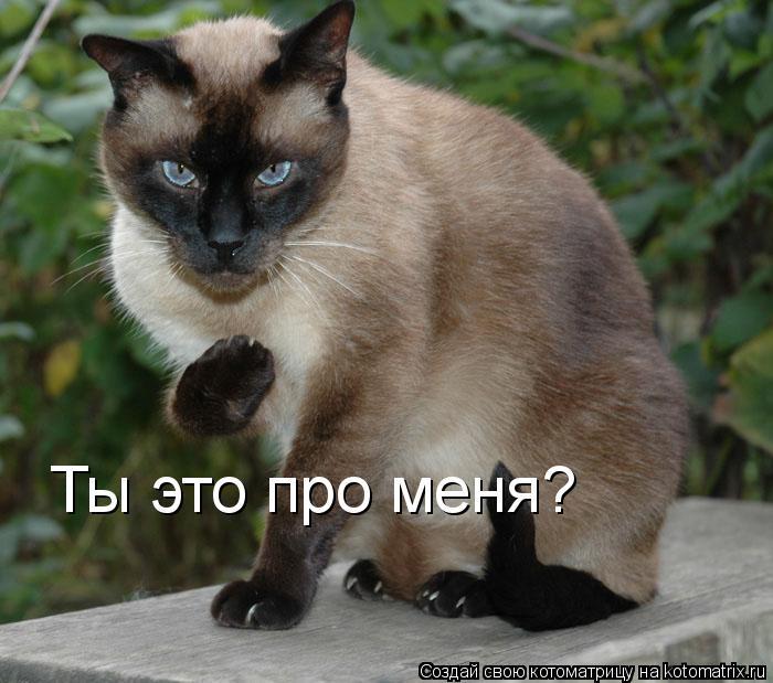 Котоматрица: Ты это про меня?