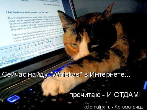 """Котоматрица: Сейчас найду """"Whiskas"""" в Интернете... прочитаю - И ОТДАМ!"""