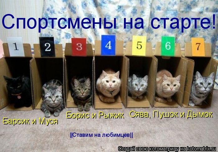 Котоматрица: Барсик и Муся Борис и Рыжик Сява, Пушок и Дымок Спортсмены на старте! ||Ставим на любимцев||