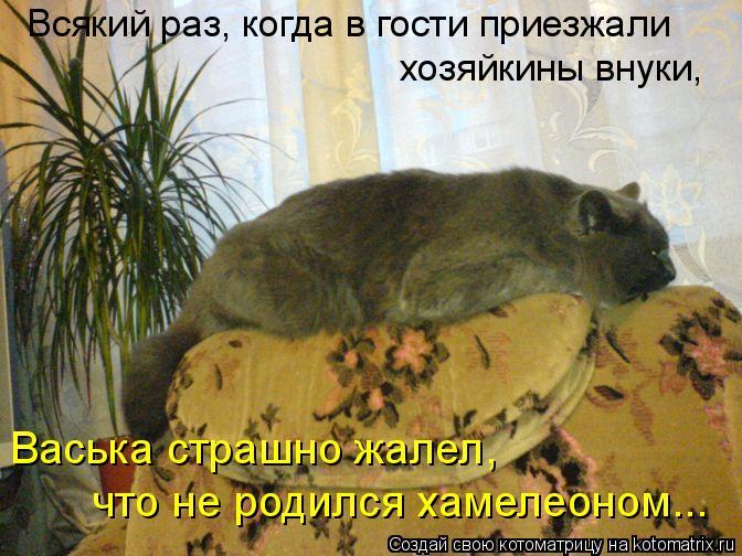 Котоматрица: Всякий раз, когда в гости приезжали хозяйкины внуки, Васька страшно жалел,  что не родился хамелеоном...