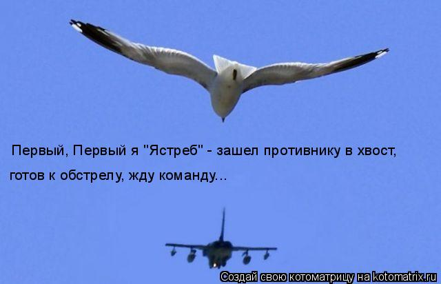 """Котоматрица: Первый, Первый я """"Ястреб"""" - зашел противнику в хвост, готов к обстрелу, жду команду..."""