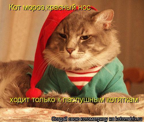 Котоматрица: Кот мороз,красный нос ходит только к паслушным котяткам