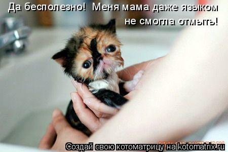 Котоматрица: Да бесполезно!  Меня мама даже языком  не смогла отмыть!