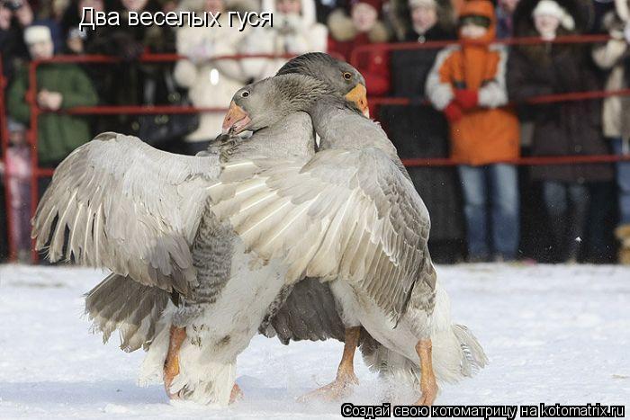 Котоматрица: Два веселых гуся