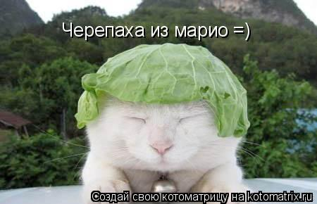 Котоматрица: Черепаха из марио =)