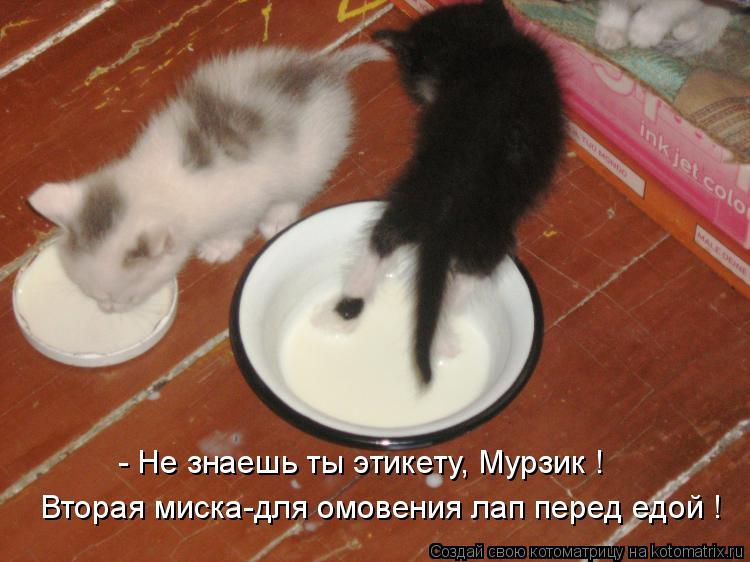 Котоматрица: Вторая миска-для омовения лап перед едой ! - Не знаешь ты этикету, Мурзик !