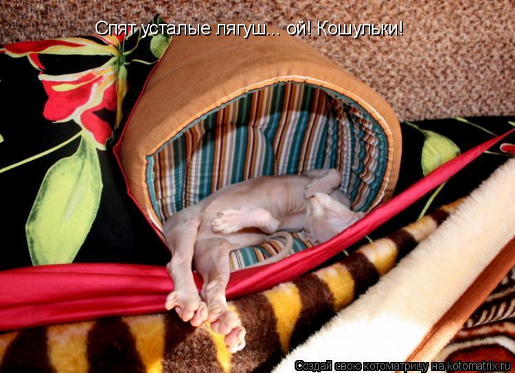 Котоматрица: Спят усталые лягуш... ой! Кошульки!