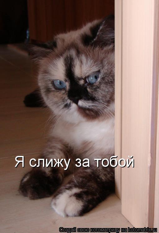 Котоматрица: Я слижу за тобой