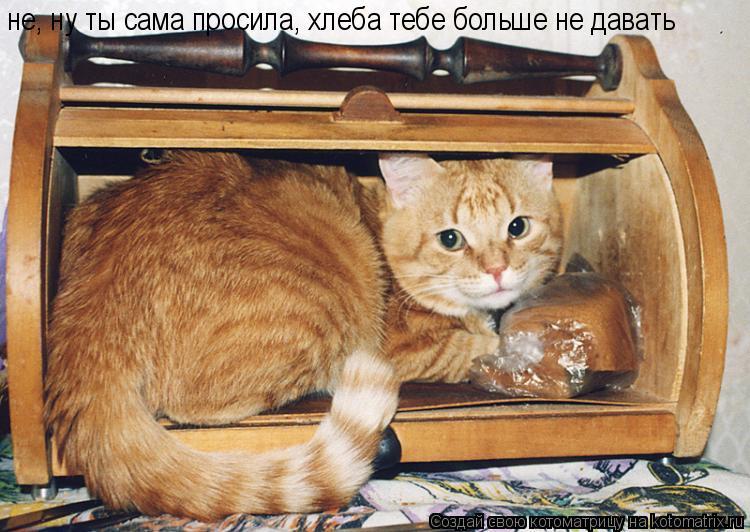 Котоматрица: не, ну ты сама просила, хлеба тебе больше не давать