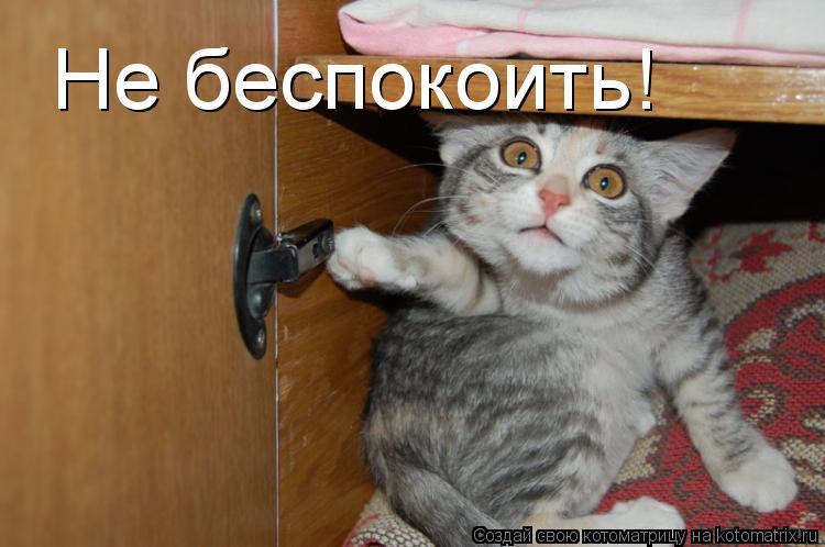 Котоматрица: Не беспокоить!