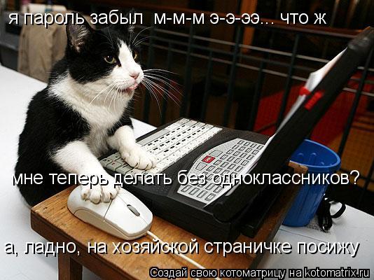 Котоматрица: я пароль забыл  м-м-м э-э-ээ... что ж  мне теперь делать без одноклассников? а, ладно, на хозяйской страничке посижу