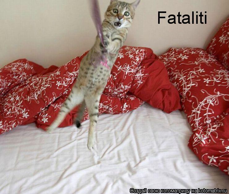 Котоматрица: Fataliti