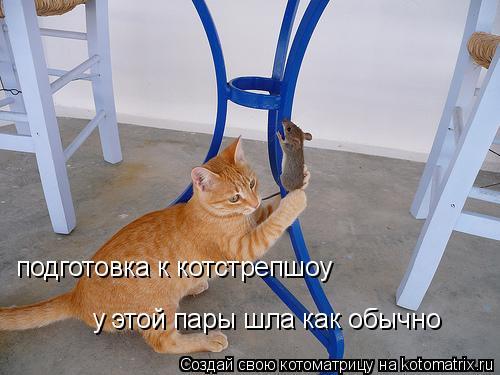 Котоматрица: у этой пары шла как обычно подготовка к котстрепшоу