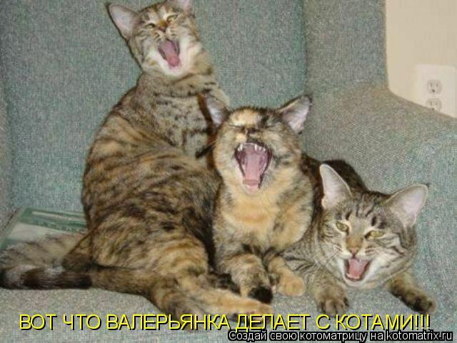 Что валерьянка делает с котами