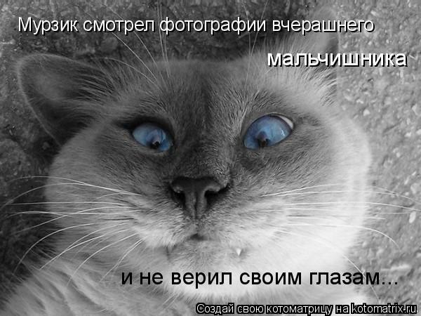 Котоматрица: Мурзик смотрел фотографии вчерашнего и не верил своим глазам... мальчишника