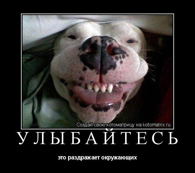 Котоматрица: улыбайтесь это раздражает окружающих