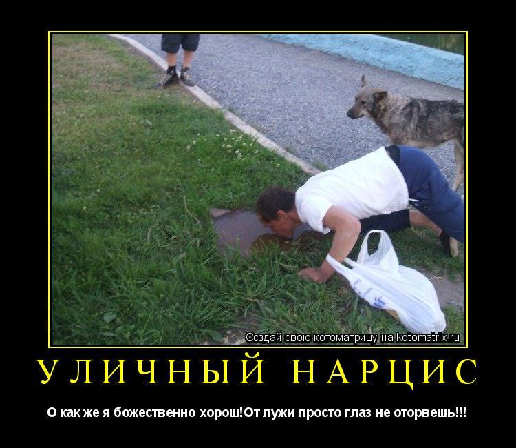 Котоматрица: уличный нарцис О как же я божественно хорош!От лужи просто глаз не оторвешь!!!