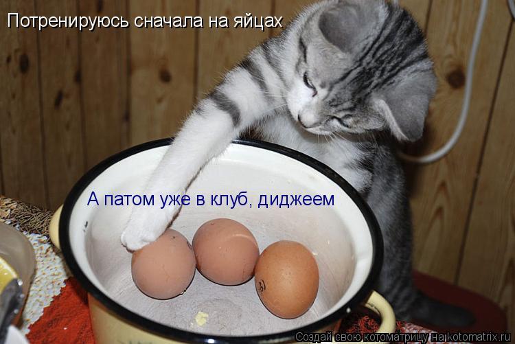 Котоматрица: Потренируюсь сначала на яйцах А патом уже в клуб, диджеем