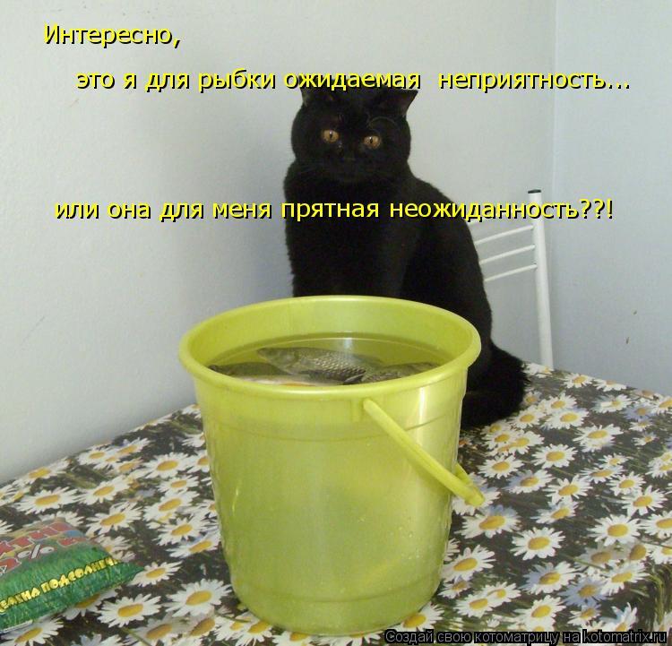 Котоматрица: Интересно,  это я для рыбки ожидаемая  неприятность... или она для меня прятная неожиданность??!