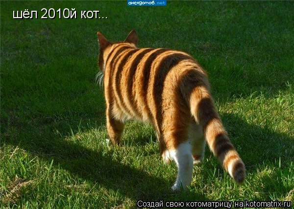Котоматрица: шёл 2010й кот...