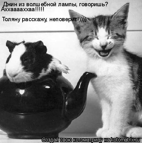 Котоматрица: Джин из волшебной лампы, говоришь? Аххааааххаа!!!!! Толяну расскажу, неповерит!))))