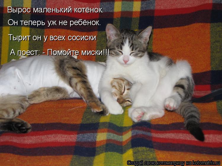 Котоматрица: Вырос маленький котёнок. Он теперь уж не ребёнок. Тырит он у всех сосиски А поест: - Помойте миски!!!