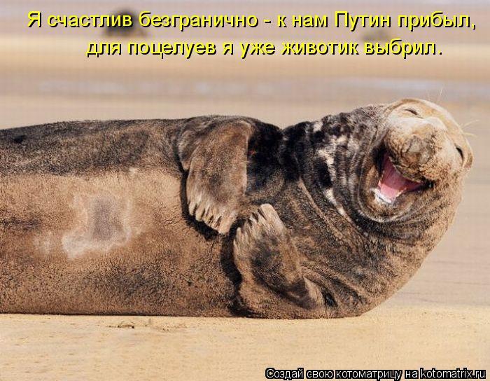 Котоматрица: Я счастлив безгранично - к нам Путин прибыл, для поцелуев я уже животик выбрил.