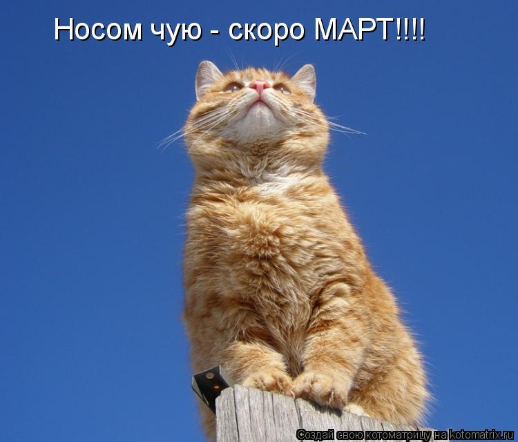 Котоматрица: Носом чую - скоро МАРТ!!!!