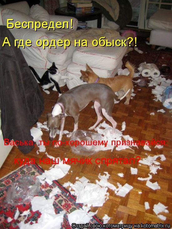 Котоматрица: А где ордер на обыск?! Васька, ты по-хорошему признавайся: куда наш мячик спрятал? Беспредел!