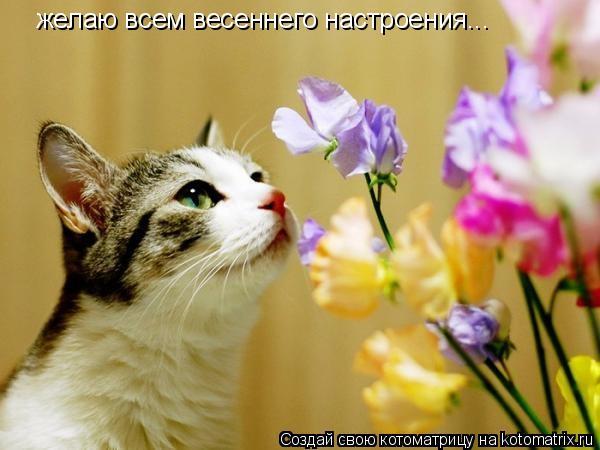 Котоматрица: желаю всем весеннего настроения...