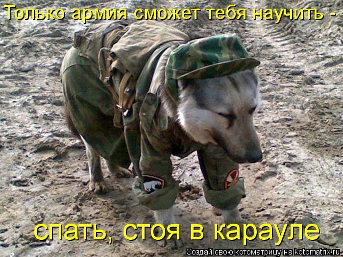 Котоматрица: Только армия сможет тебя научить - спать, стоя в карауле