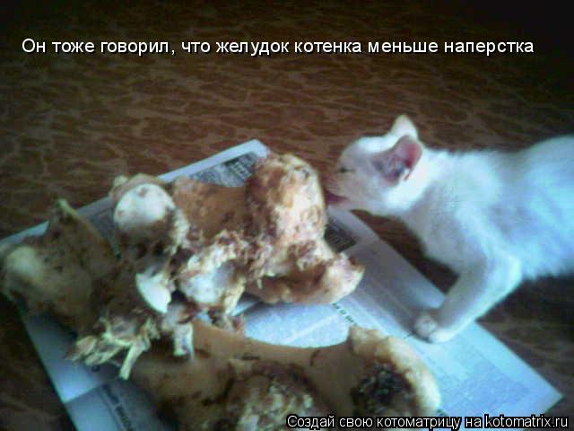Котоматрица: Он тоже говорил, что желудок котенка меньше наперстка Он тоже говорил, что желудок котенка меньше наперстка