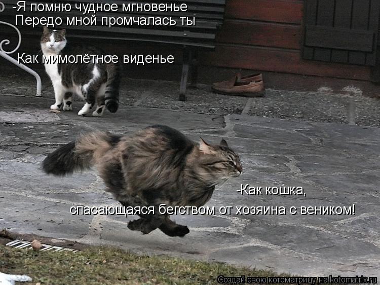 Котоматрица: -Я помню чудное мгновенье Передо мной промчалась ты Как мимолётное виденье -Как кошка,  спасающаяся бегством от хозяина с веником!